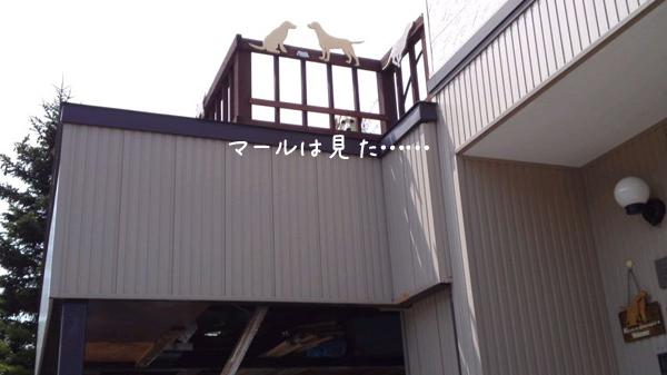 marubaru_20120509235517.jpg
