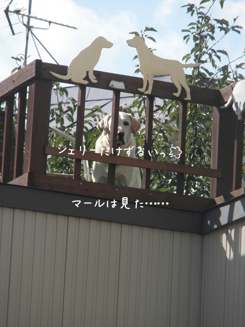 marubaru_20121016214956.jpg