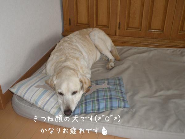 marubed_20120706220227.jpg