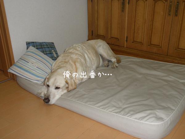 marubed_20121021205534.jpg