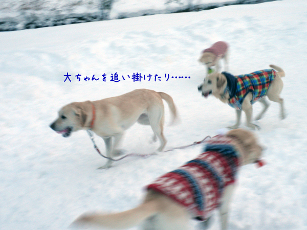 marudai_20121215214246.jpg