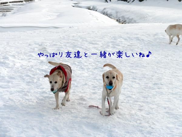marudai_20130103203426.jpg