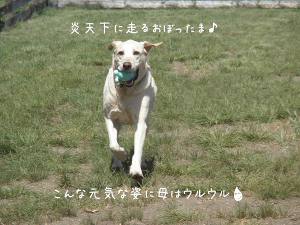 maruhasiru_20120902215649.jpg