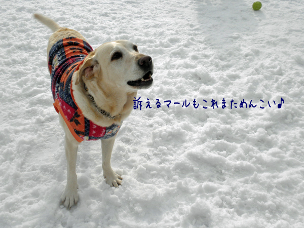 maruhiroba_20130306215018.jpg