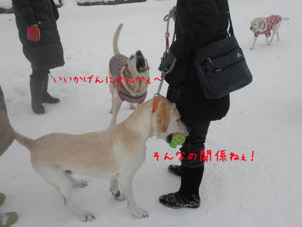 maruhoeru_20130107195535.jpg