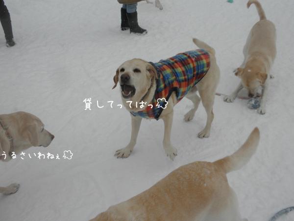 maruhoeru_20130218223013.jpg