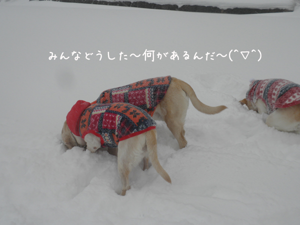 marukeri2_20130121000639.jpg