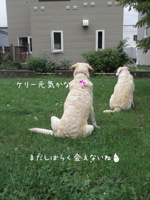 marukeri_20120916201659.jpg