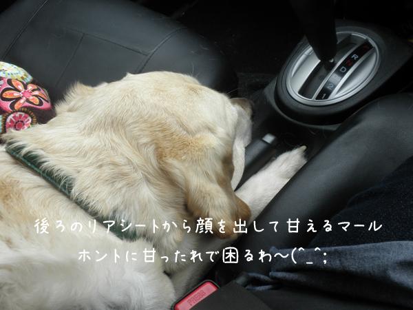 marukuruma_20120704221738.jpg