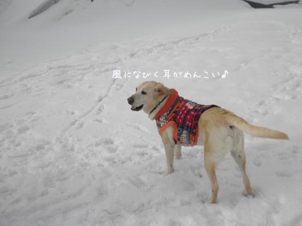 marumimi_20130306215023.jpg