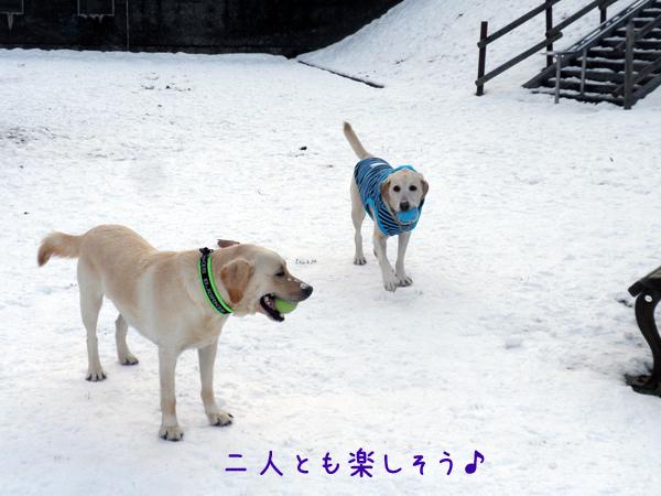 marunotei1_20121125203049.jpg