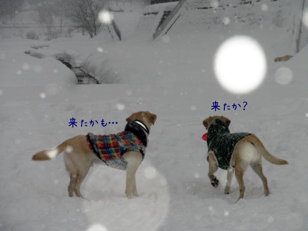 marunotei1_20121222195153.jpg