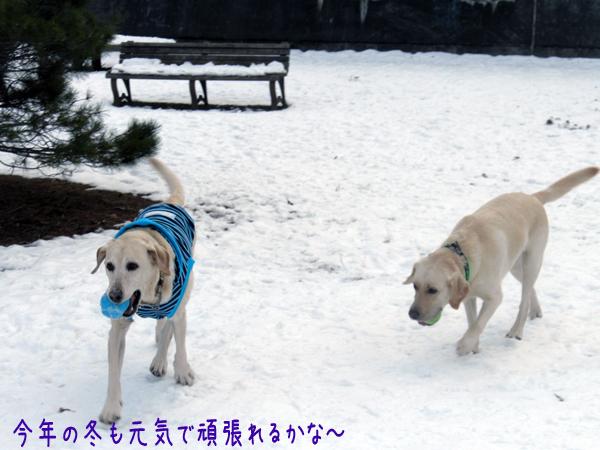 marunotei2_20121125203048.jpg
