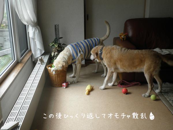 maruomotya_20120601205943.jpg