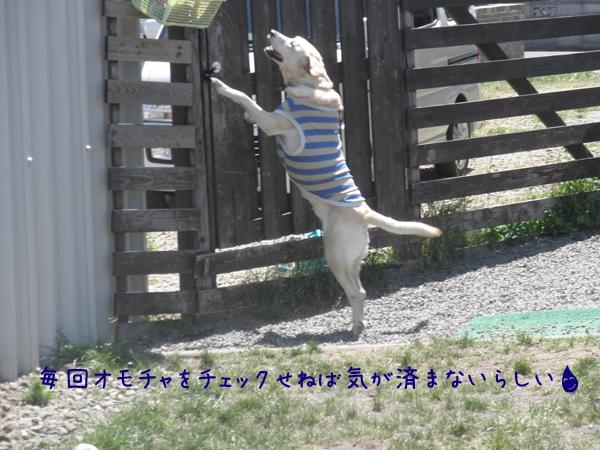 maruomotya_20120603215910.jpg