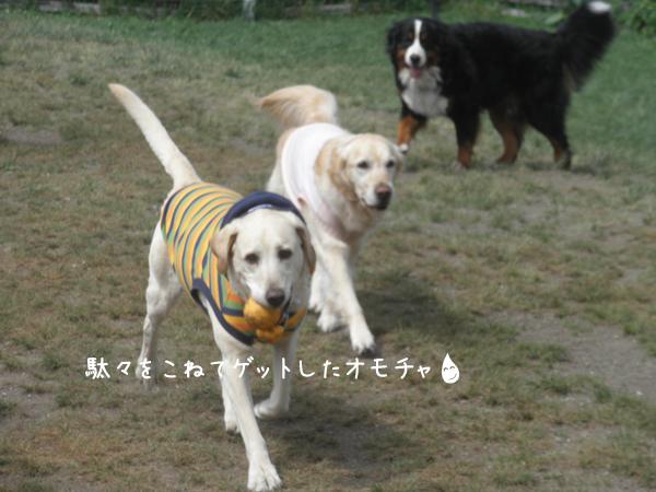 maruomotya_20120607215216.jpg