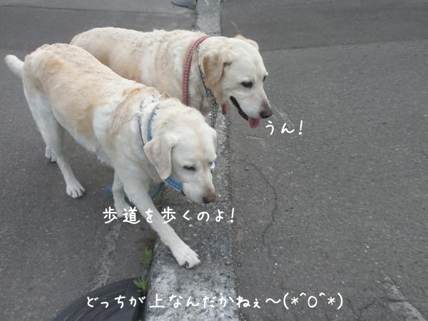 marusyeri1_20120703181235.jpg