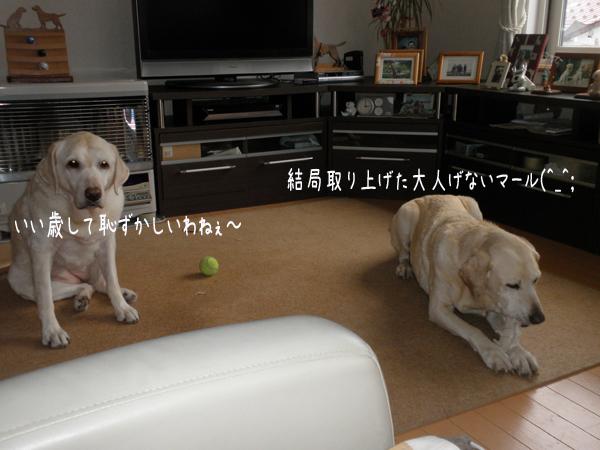 marusyeri1_20121205174035.jpg