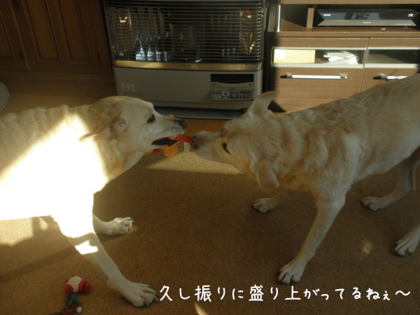 marusyeri1_20130113195343.jpg