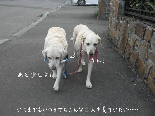 marusyeri2_20120703181234.jpg