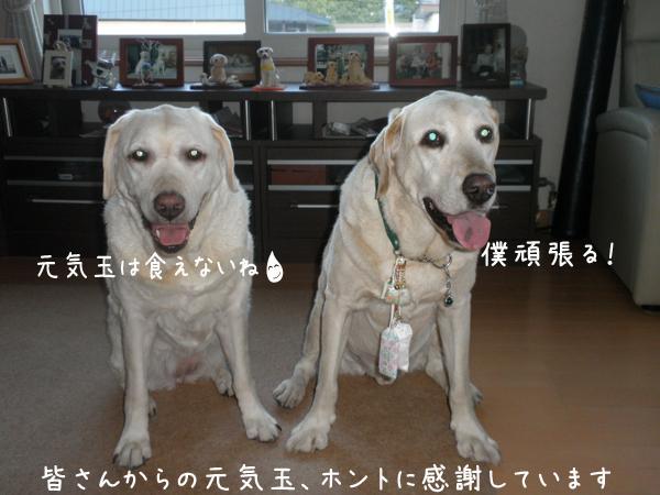 marusyeri_20120714221613.jpg