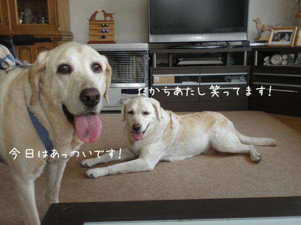 marusyeri_20120727211523.jpg
