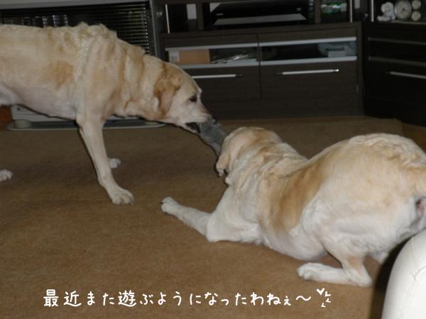 marusyeri_20121021210204.jpg