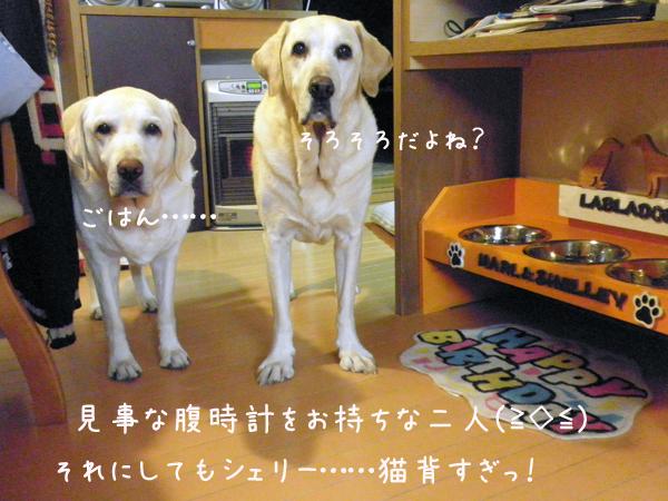 marusyeri_20121114200357.jpg