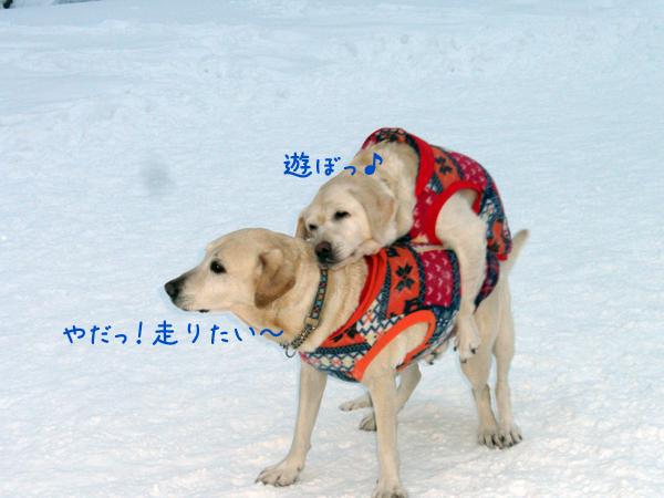 marusyeri_20121227223611.jpg