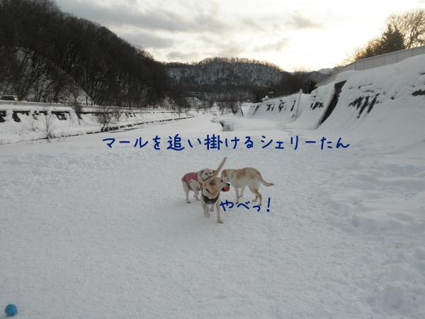 marusyeri_20121228223928.jpg