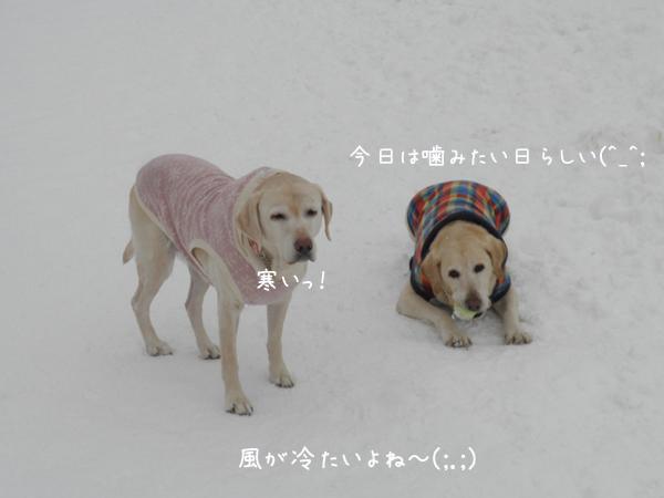 marusyeri_20130222200524.jpg