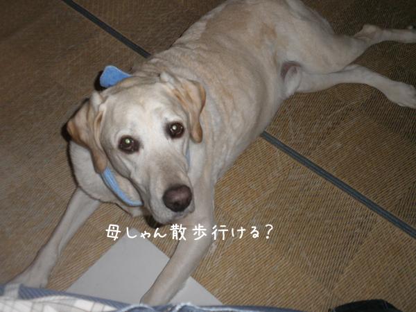 maruwasitu_20120703181235.jpg