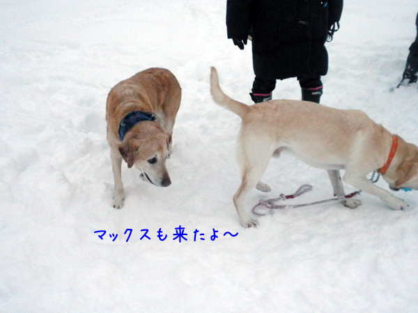 max_20121212191539.jpg