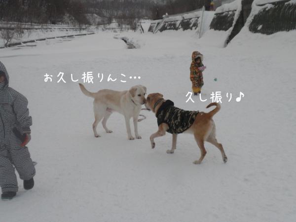 max_20130107195539.jpg