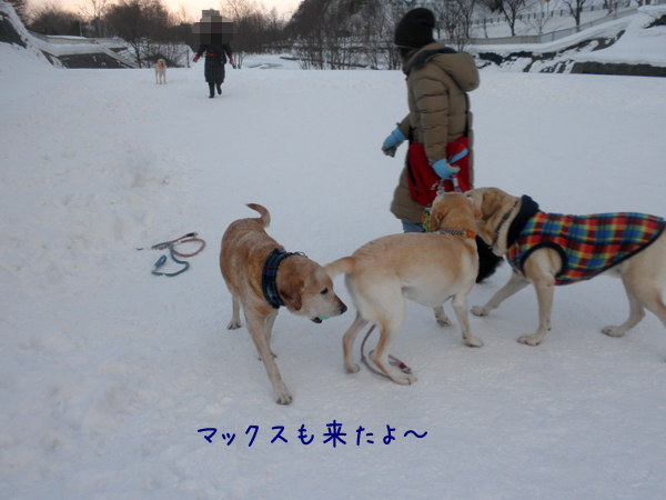 max_20130111185449.jpg