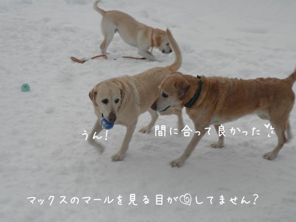 maxmaru_20130125210952.jpg