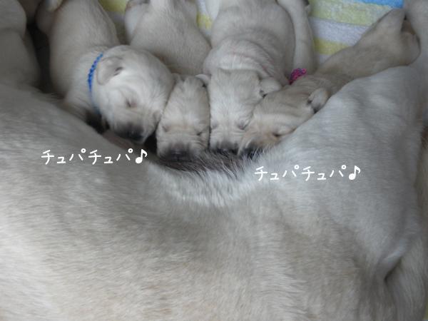 miruku2_20120712212211.jpg