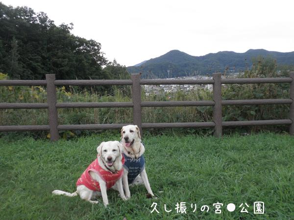 miyaoka1.jpg