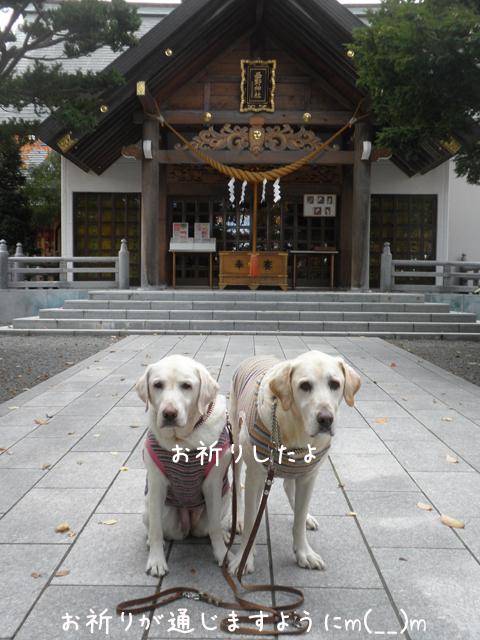 nisino_20121110204615.jpg