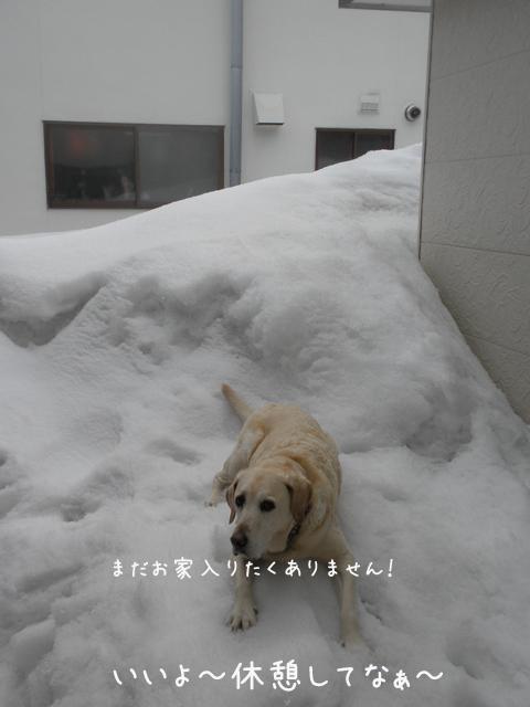 niwa1_20130326225531.jpg