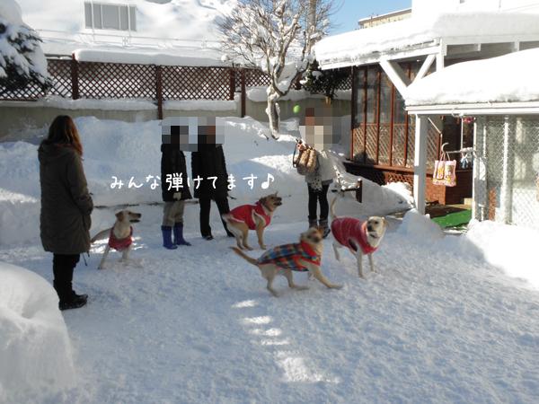 niwa2_20121219214923.jpg