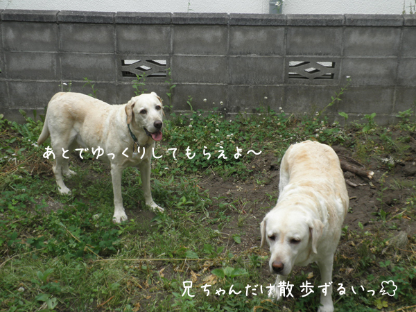 niwa_20120704221739.jpg