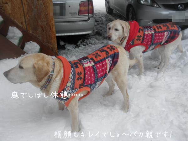 niwa_20130126222346.jpg