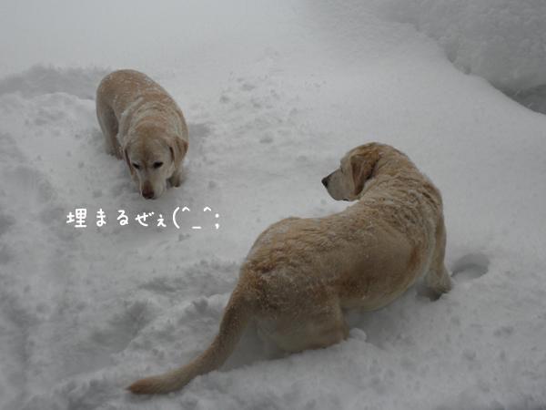 niwa_20130207193002.jpg