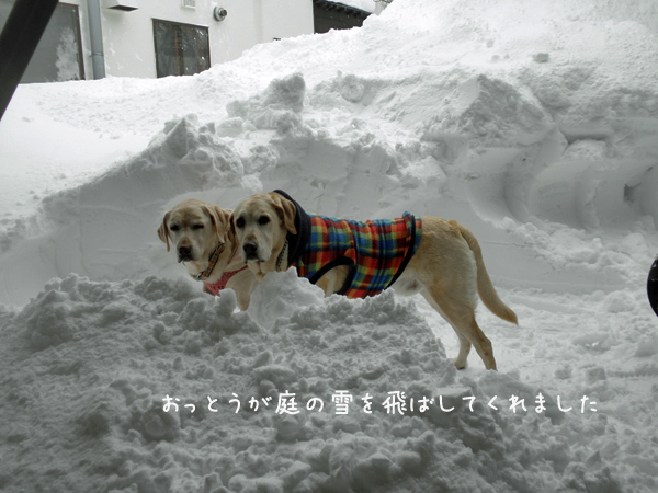 niwa_20130218223234.jpg