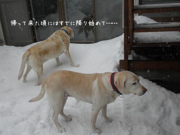 niwa_20130302204544.jpg