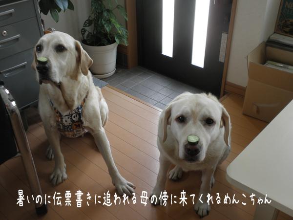 nokke_20120728190025.jpg