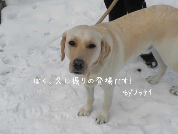 notei1_20121125203049.jpg