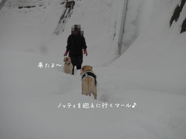 notei1_20121225220645.jpg