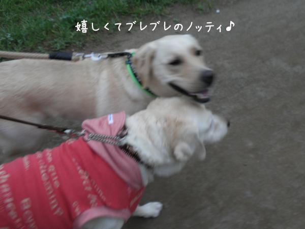 notei2_20120930211836.jpg